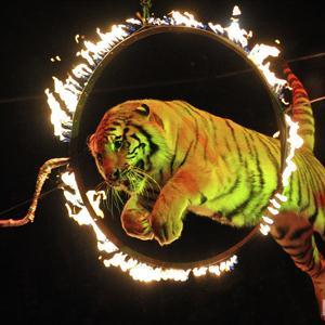 Цирки Ульяновска